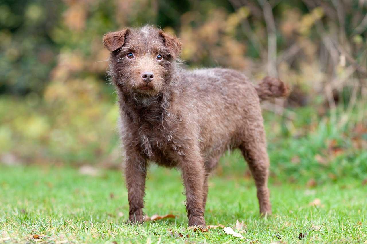 patterdale-terrier-history