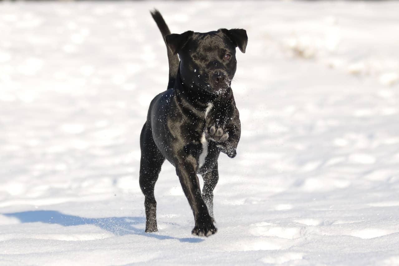 patterdale-terrier-temperament
