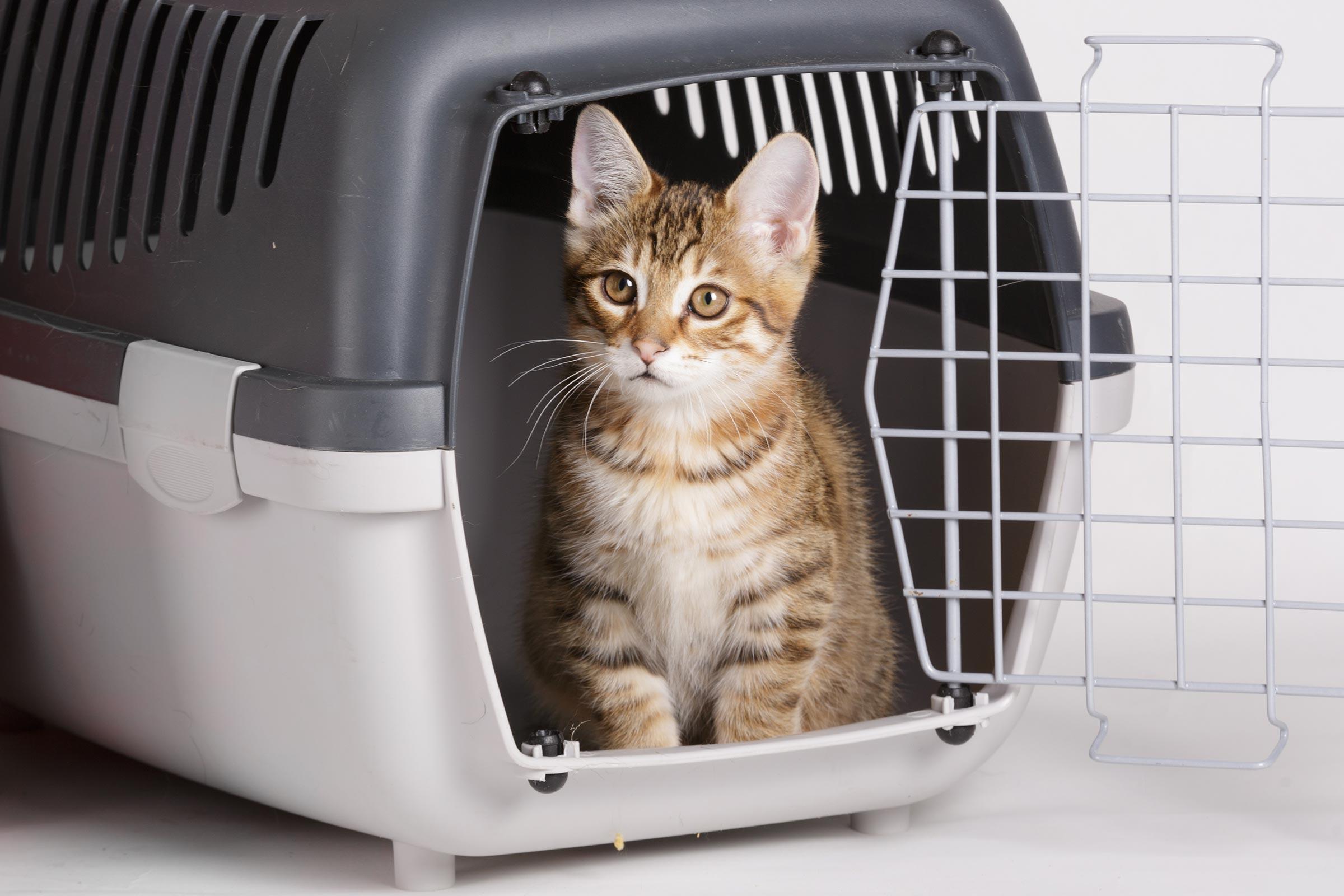 pet-odor-cat