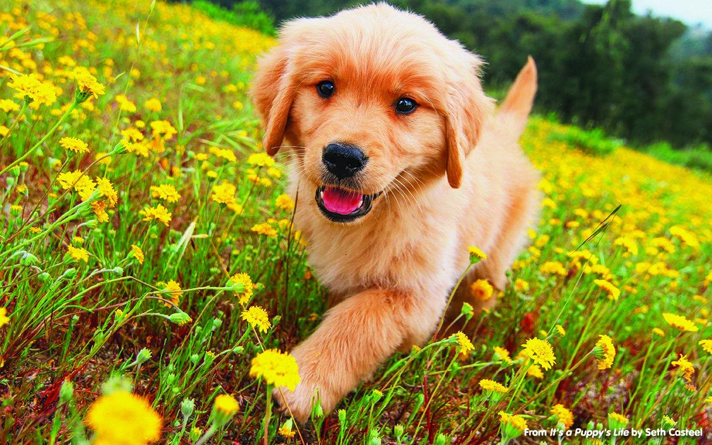 puppy-life