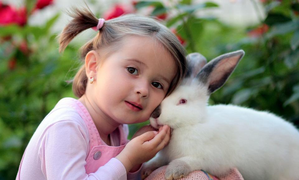 rabbit-cares