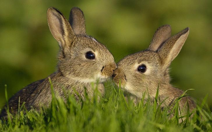 rabbit-food-chain