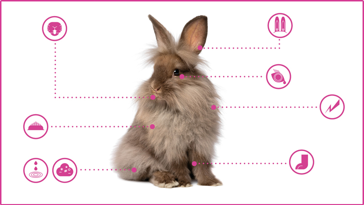 rabbit-health