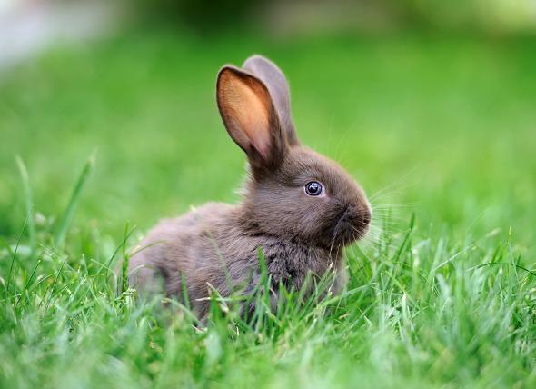 rabbit infections