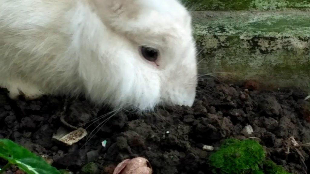 rabbit-vitamins