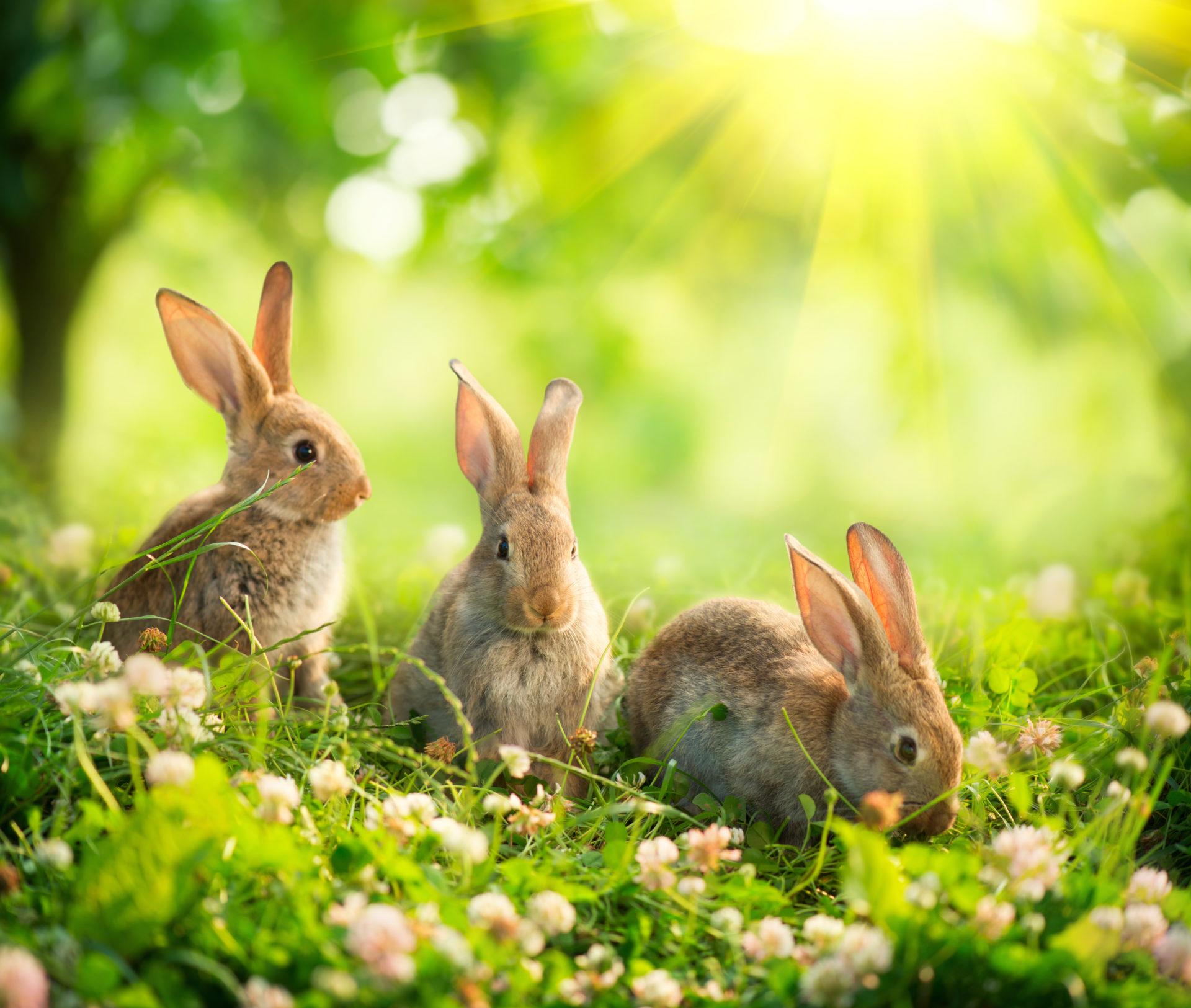 rabbit-nutritions