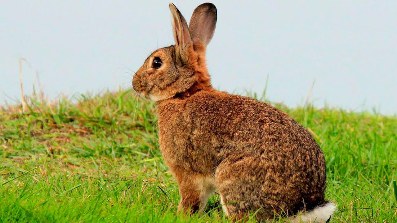 rabbit-name