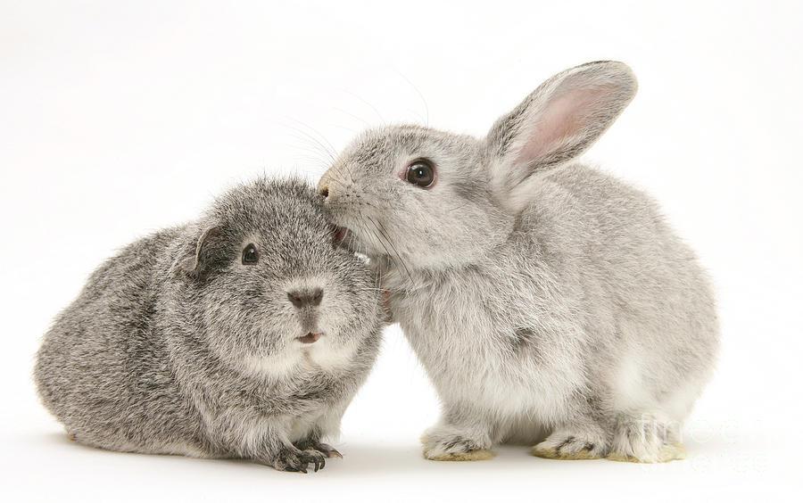 rabbit worming