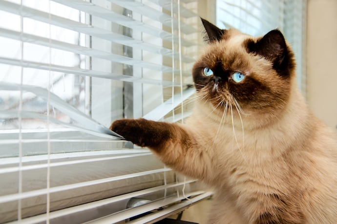 sad-cat-window