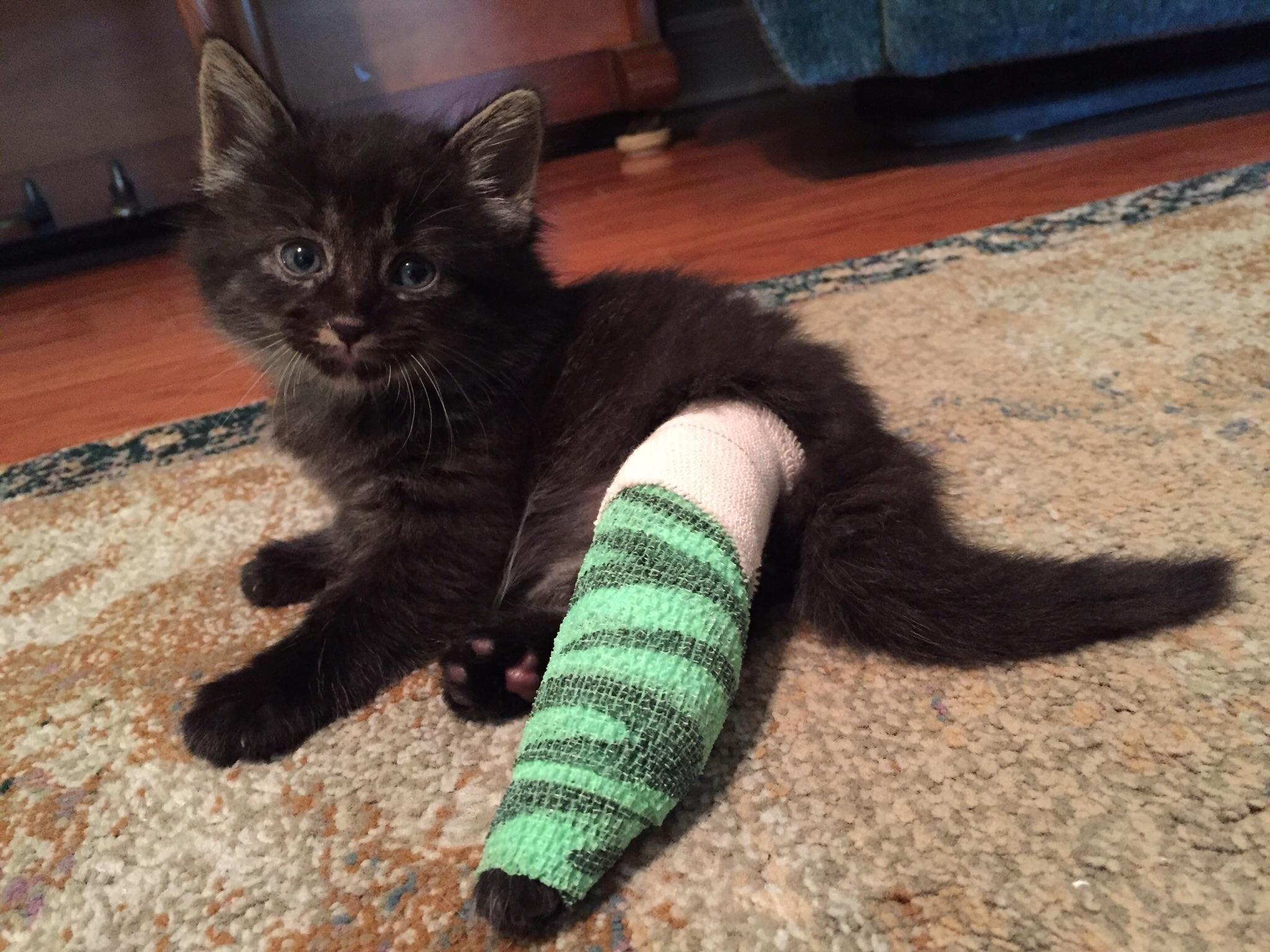 splint-a-cat