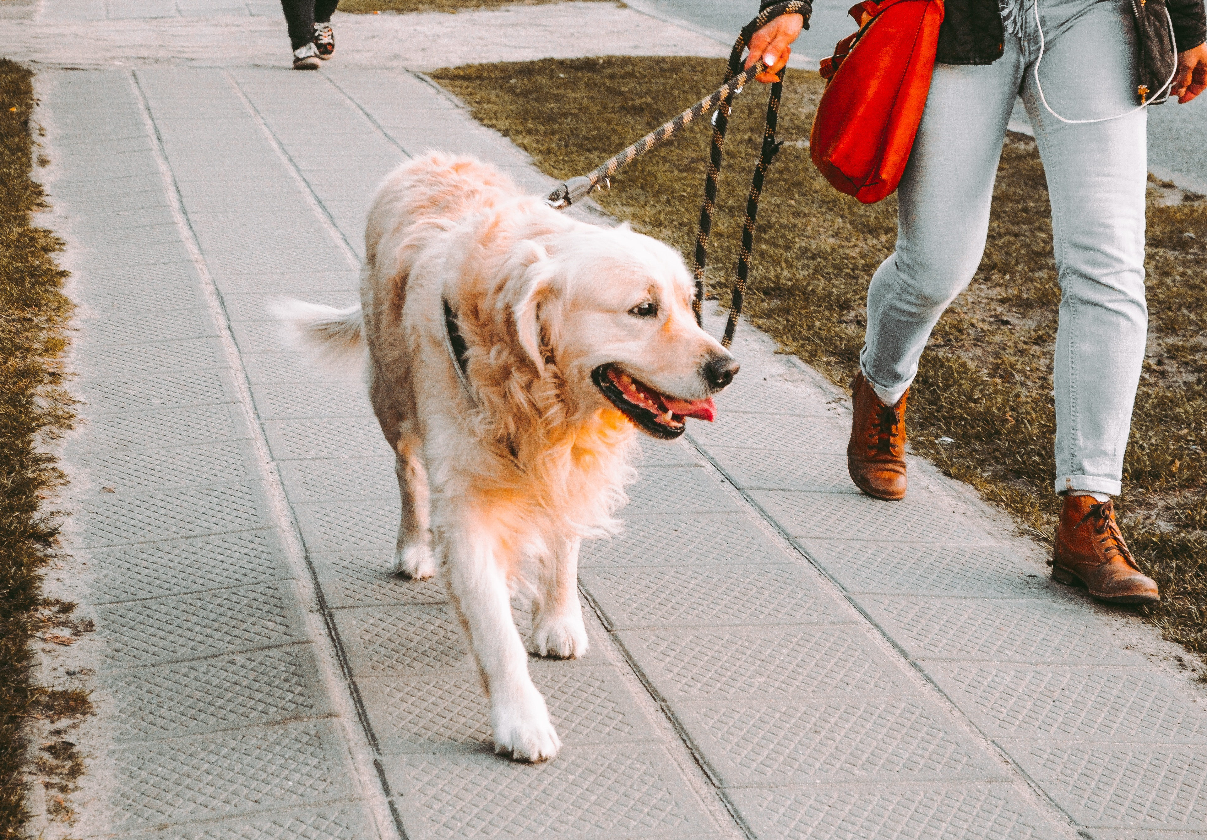 take-a-walk-with-your-dog