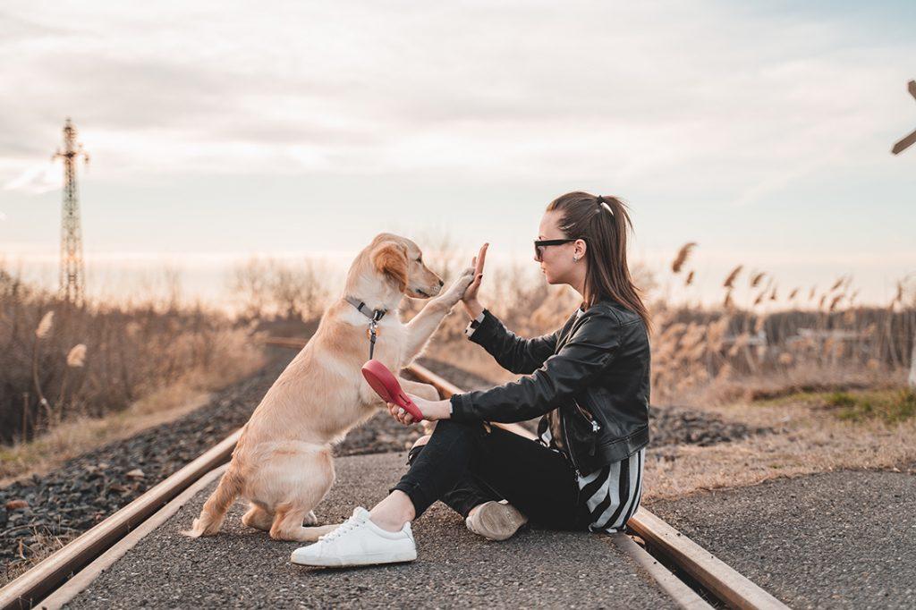 travel-dog