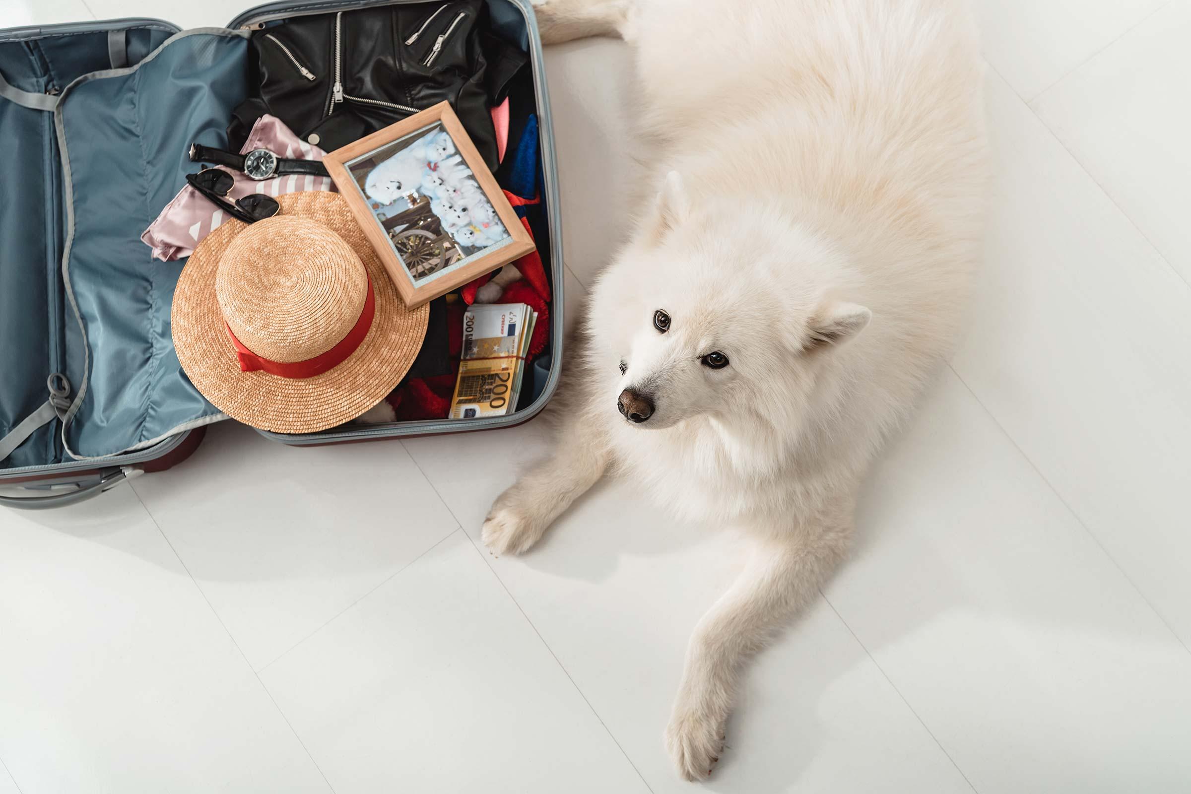 travelling-dog
