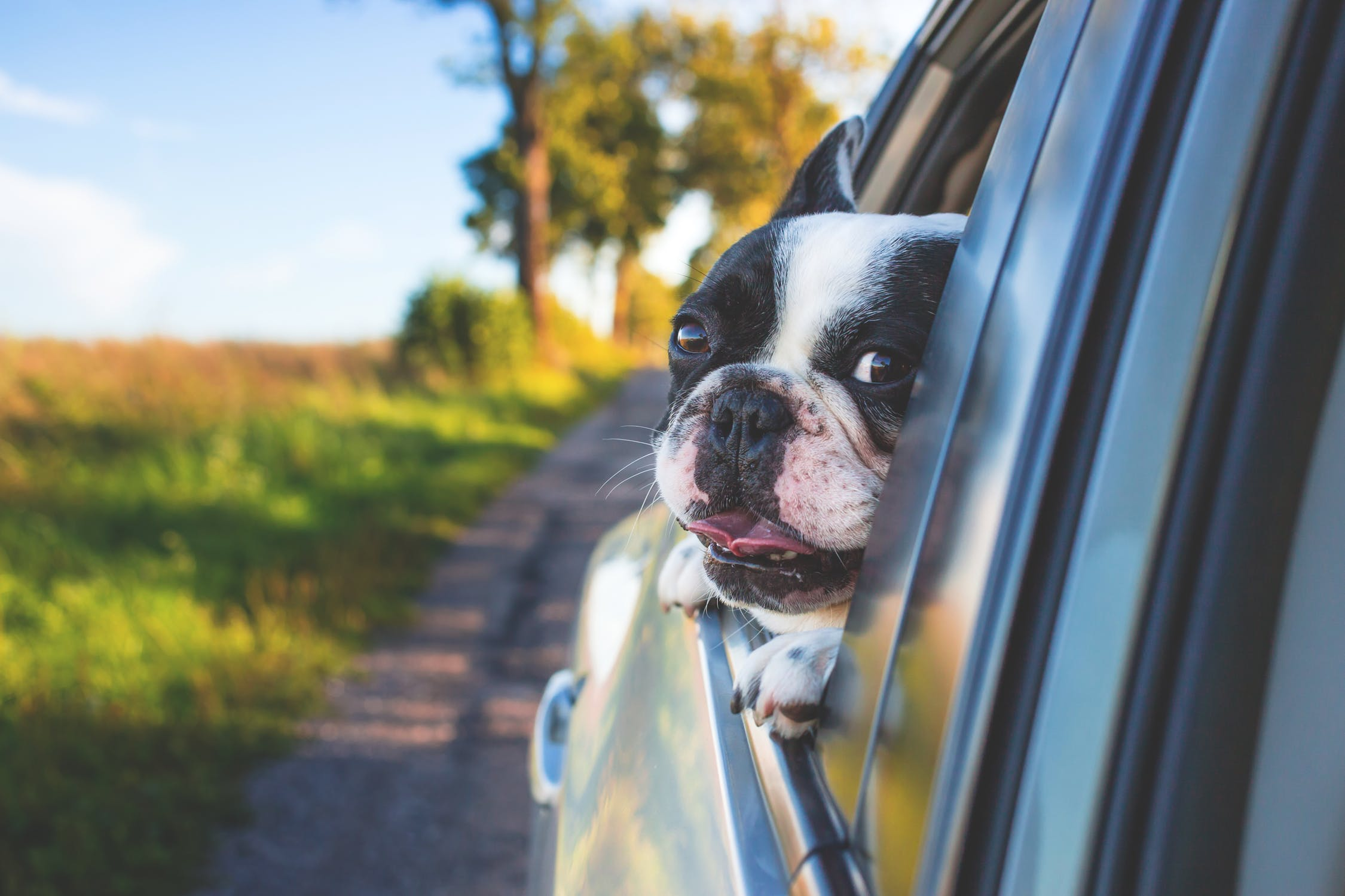 traveling-with-dog
