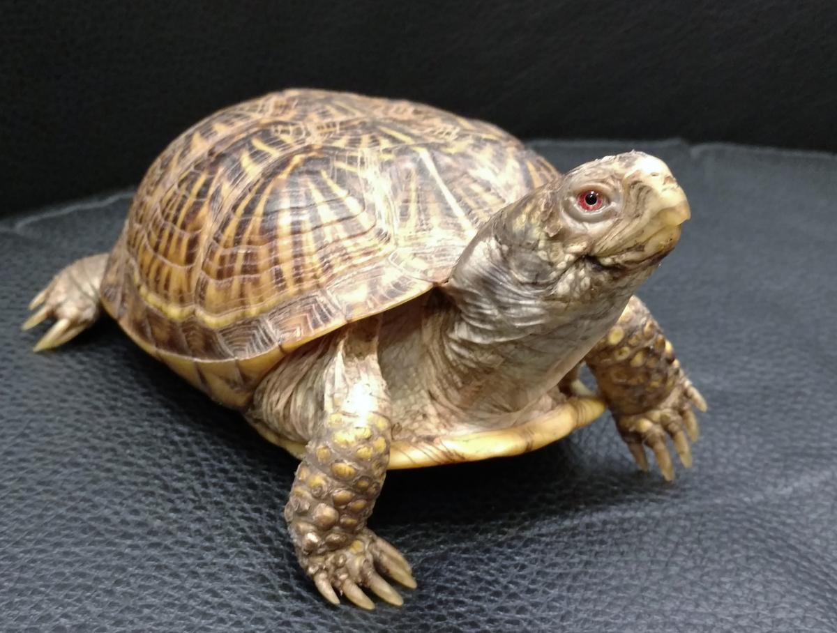turtle-care
