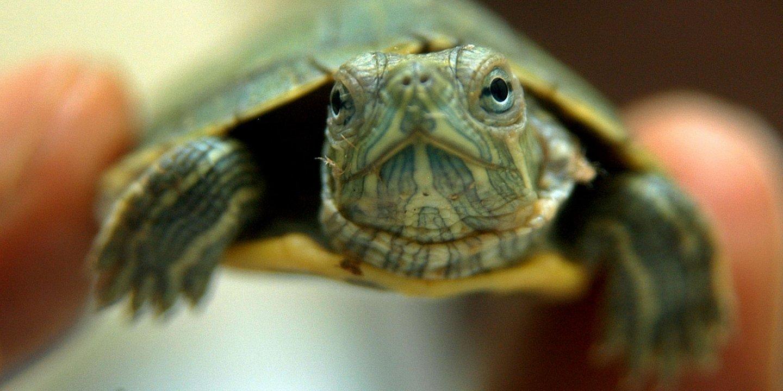 turtle-diseases
