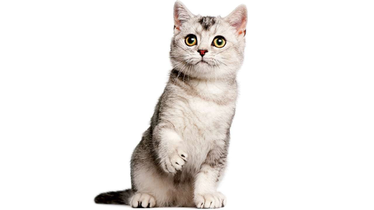 urinary system in cats