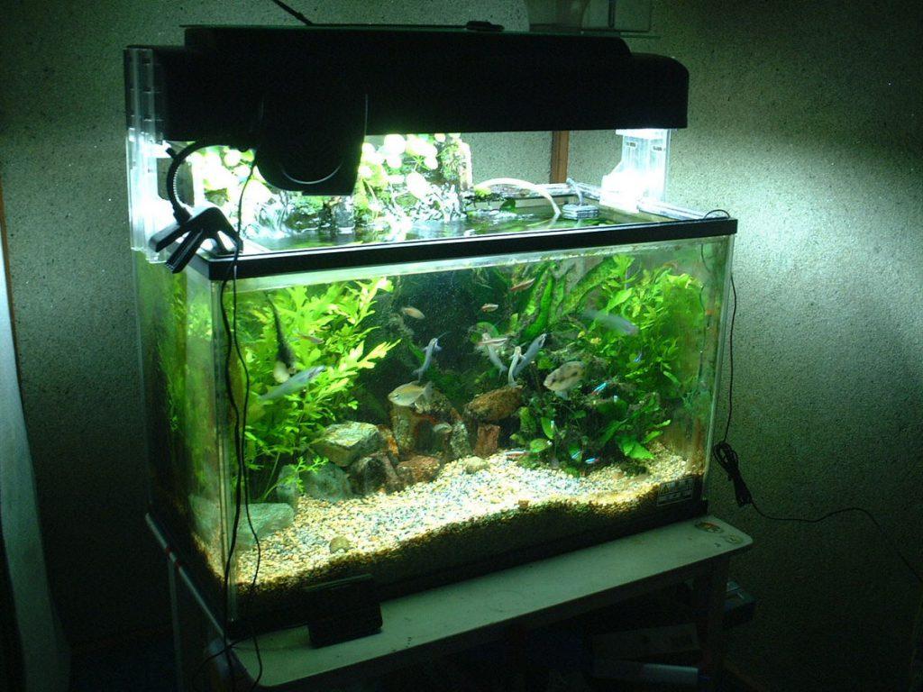 aquarium water filters
