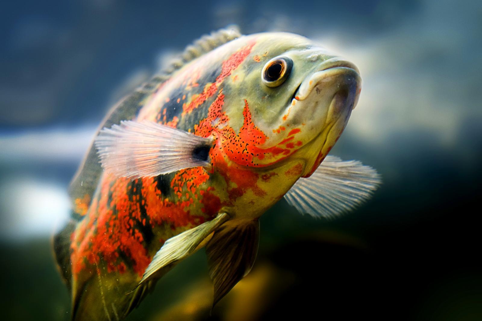 aquarium-water