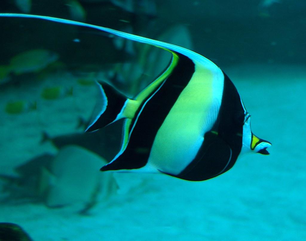 moorish-fish
