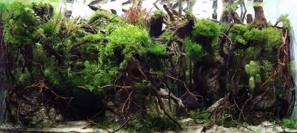 rock-in-aquascaping