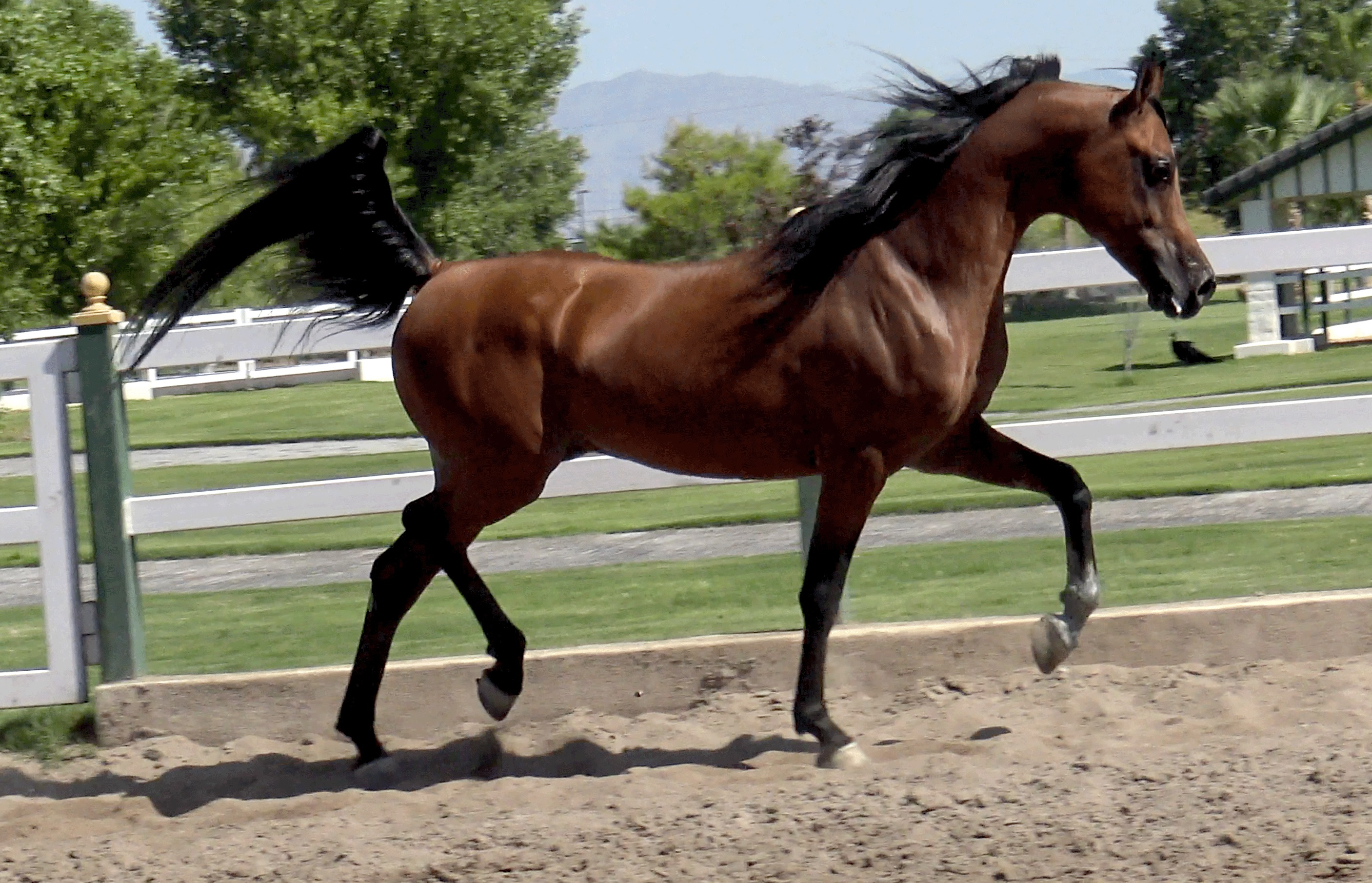 Best About Akhal Teke Horse Breed Characteristics More