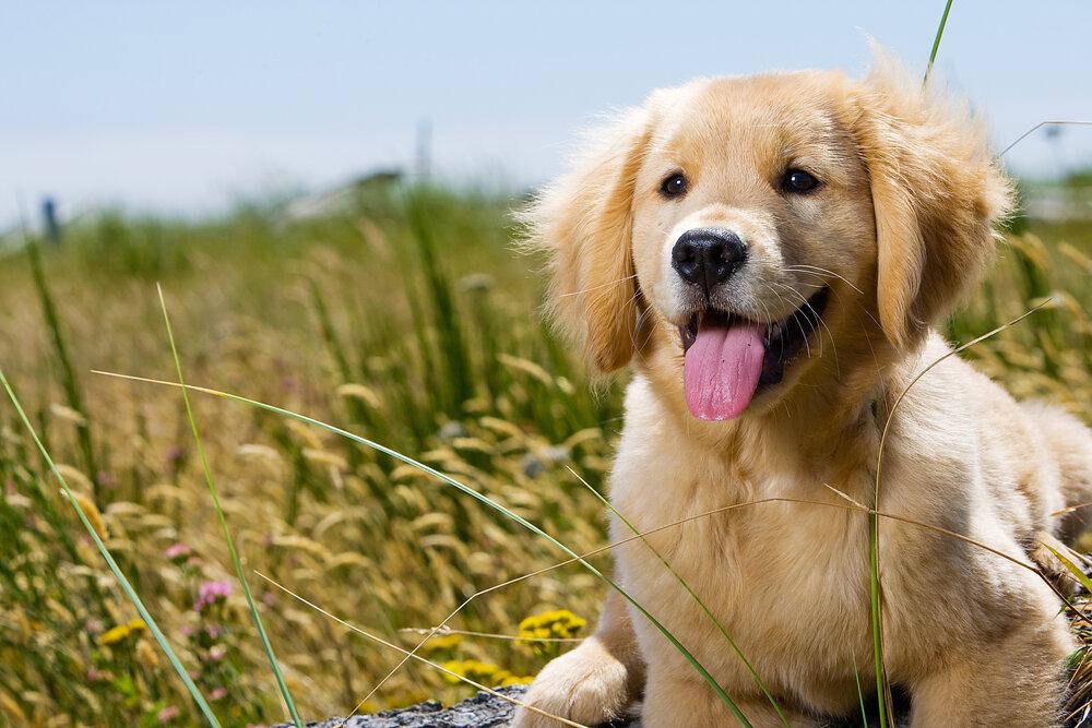 pet-training