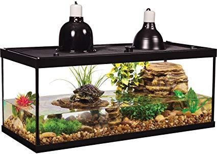 Environment for slider turtle: