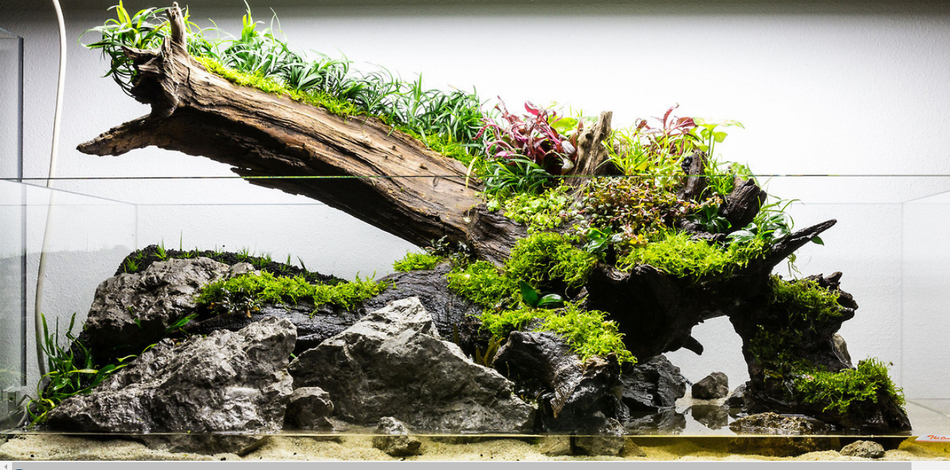 Rock in Aquascaping | Best Aquarium Hardscape Rock and Wood
