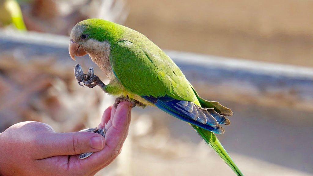 Bird Grooming