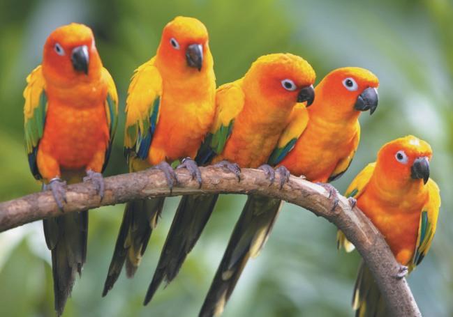 information-about-Bird-breeds