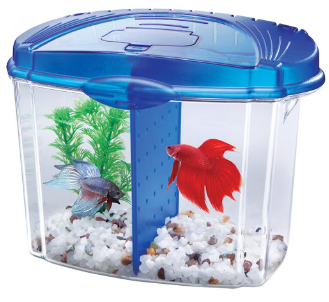 betta-fish-tanks