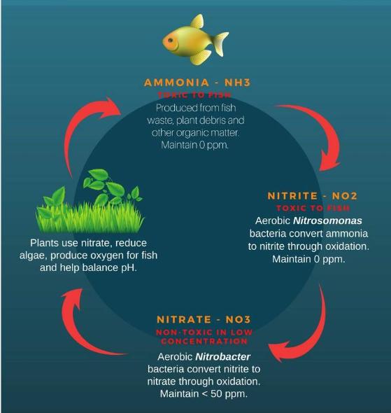 aquarium-water-cycle