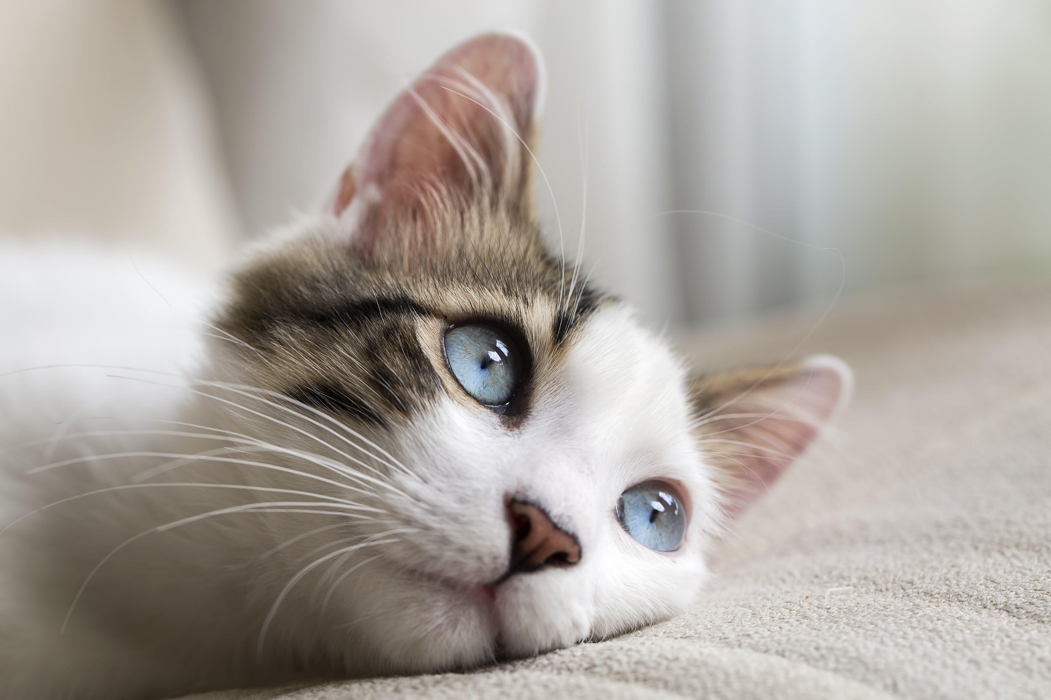 Cat-Runny-Nose