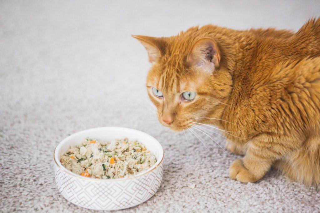 Cat-nutrition
