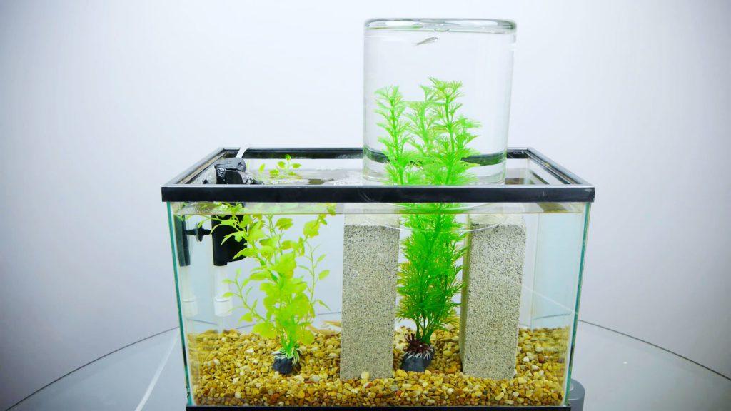 equipment-for-fish-tank