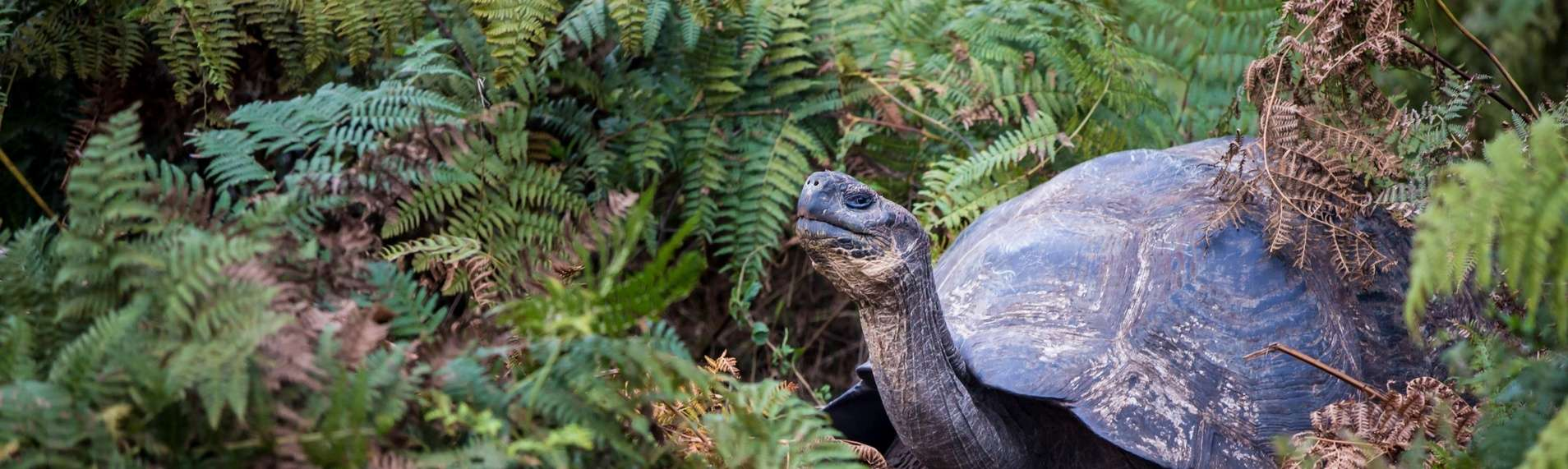 Galapagos-Tortoise-housing