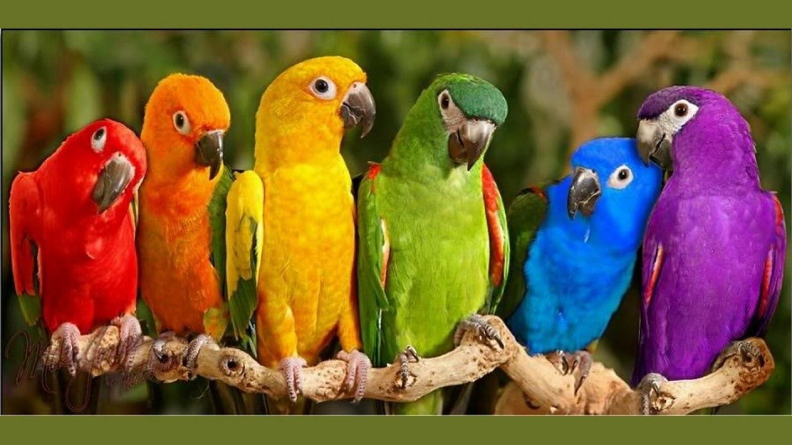 bird-breed