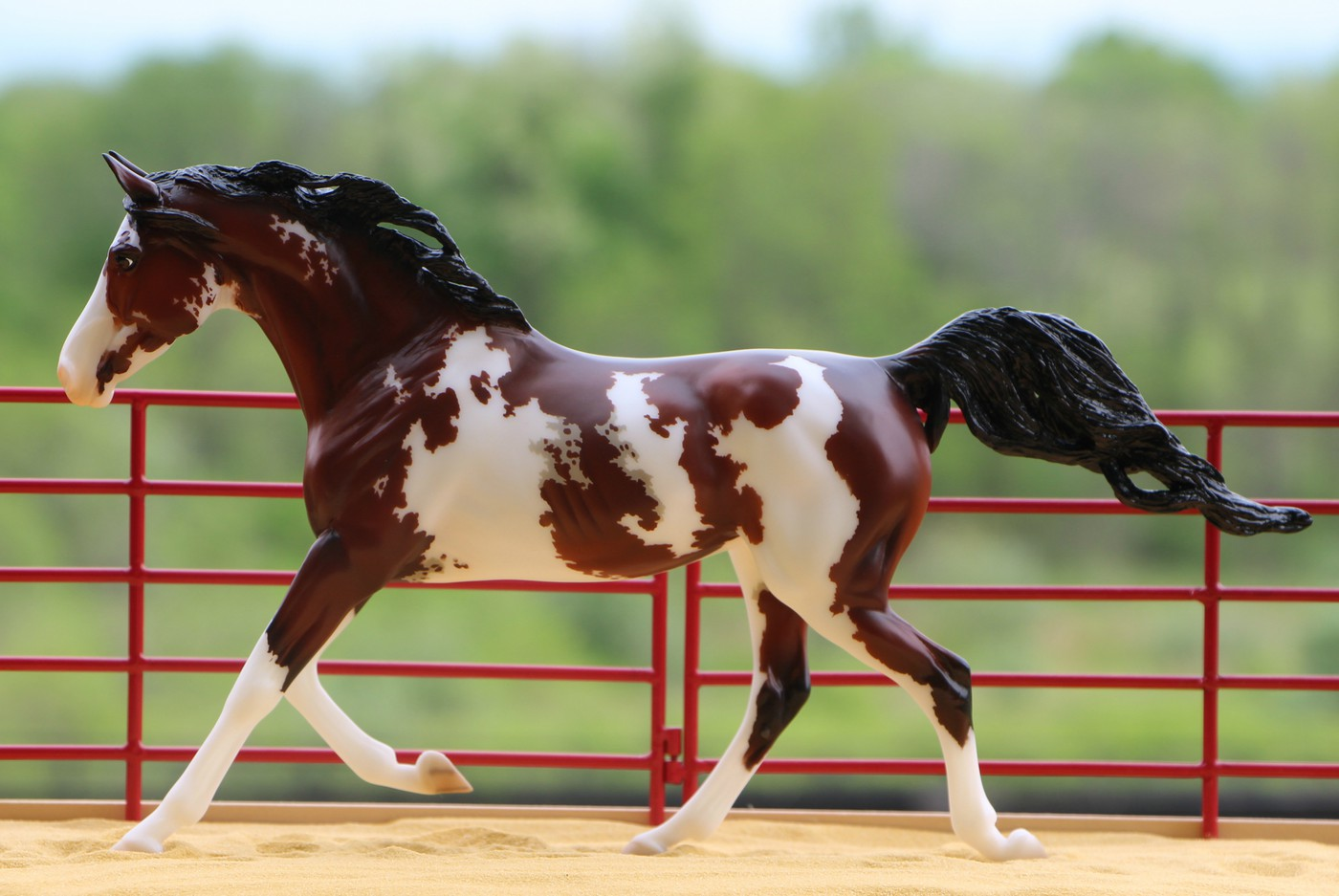 Information-about-Tiger-horse-breed