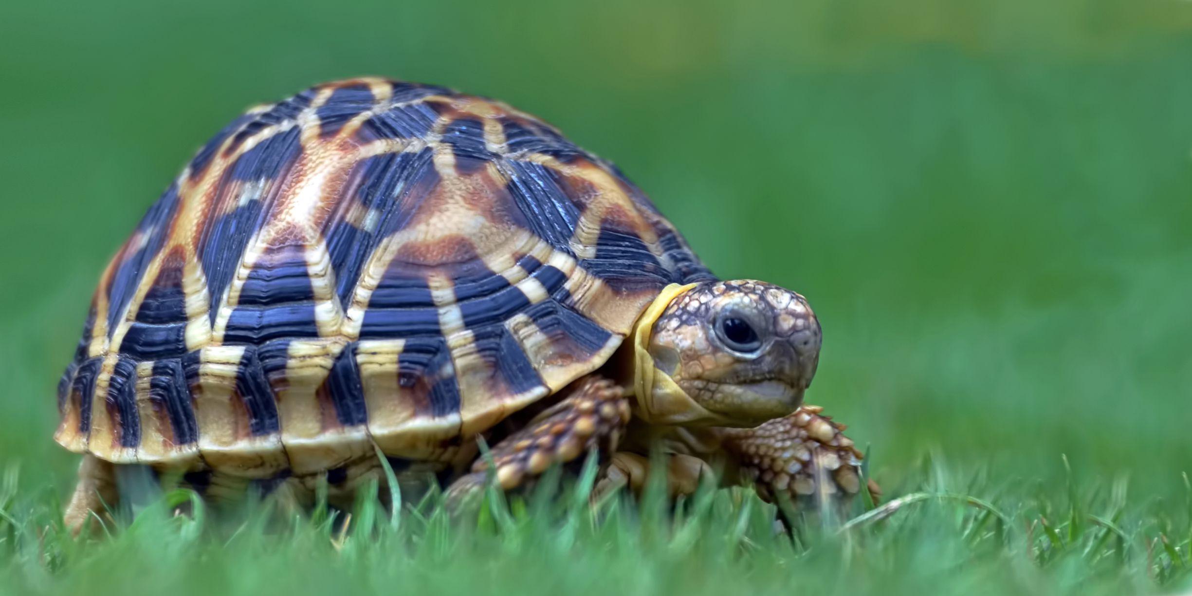 turtle-housing