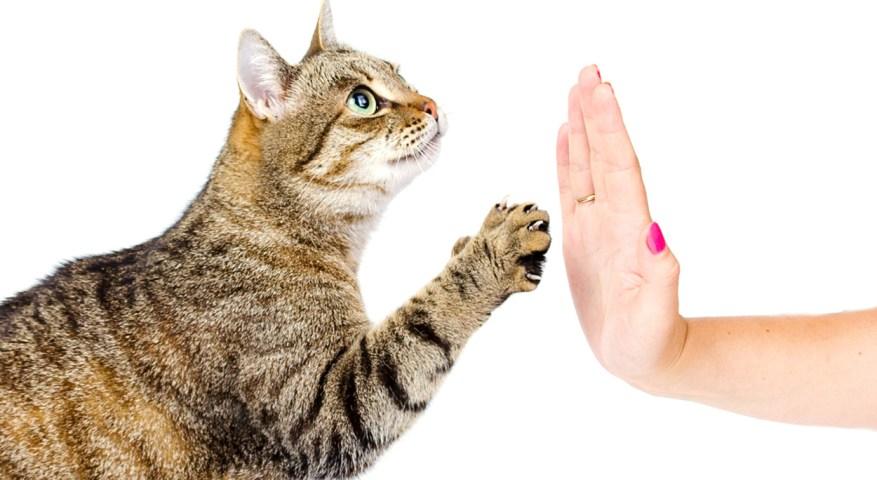 Cat-training