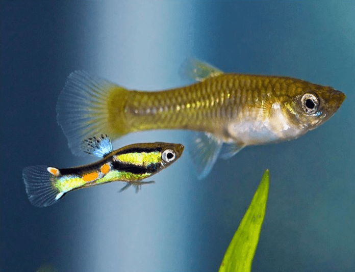 easy-to-care-fish