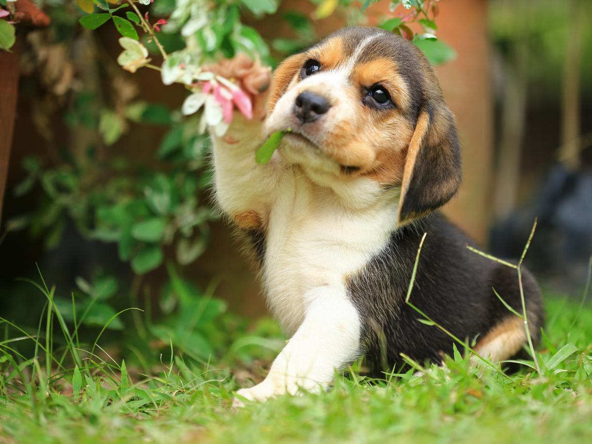 Seizures-In-Dog-Be-Handled