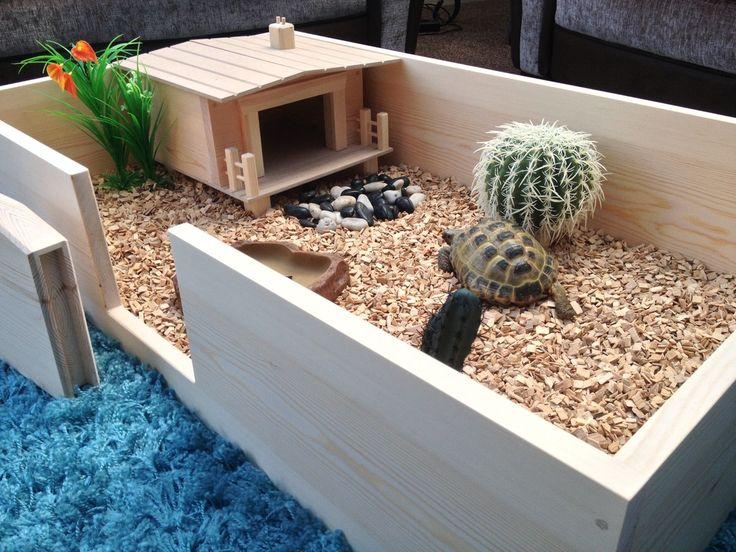 Egyptian-Tortoise