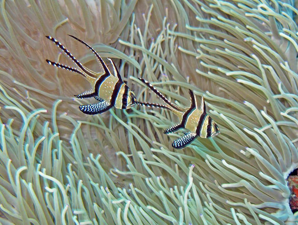 Tropical-Fish-in-Natural-Habitat