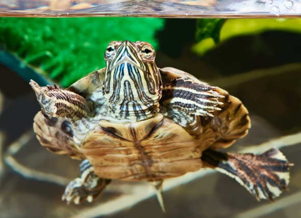 Water quality for slider turtle: