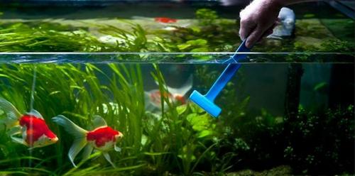 aquarium-maintenance-service