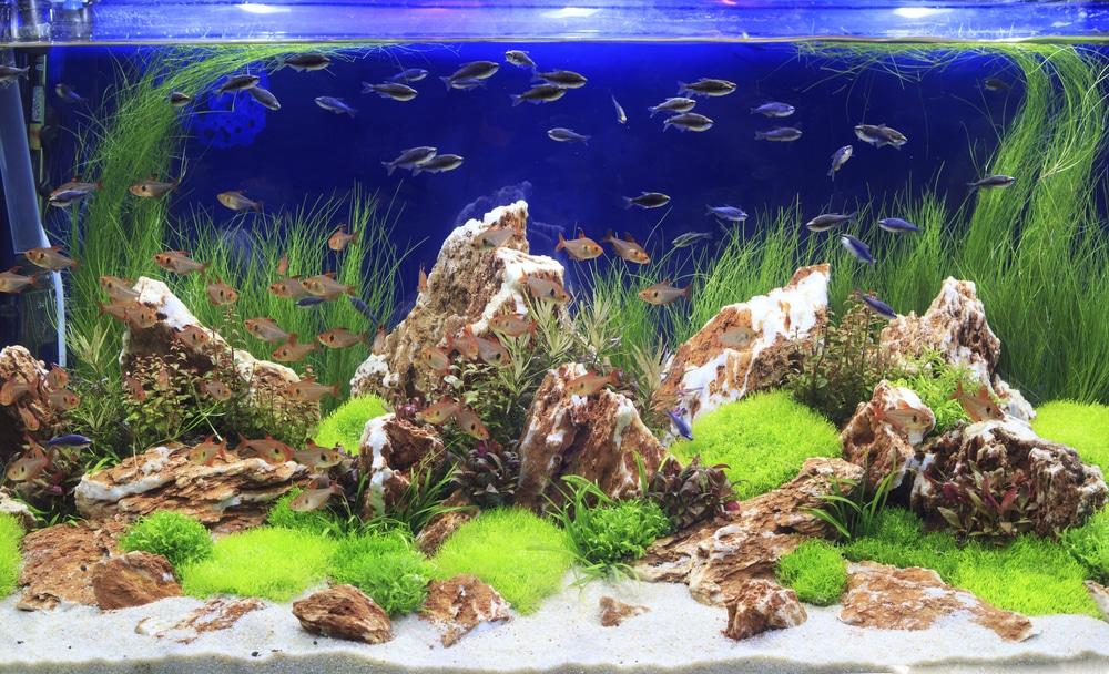 aquascaping-rocks
