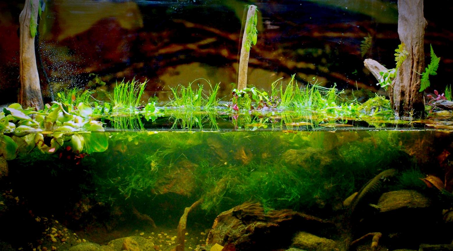 biotope-aquarium