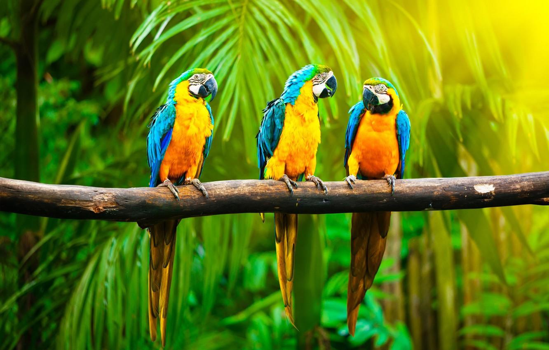 bird-breeds